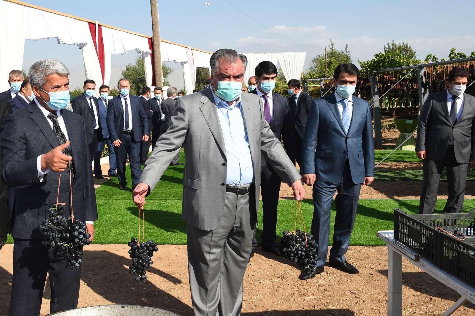 Аз пахтачинӣ то тайёр кардани мавиз: сафари президент ба шаҳри Турсунзода