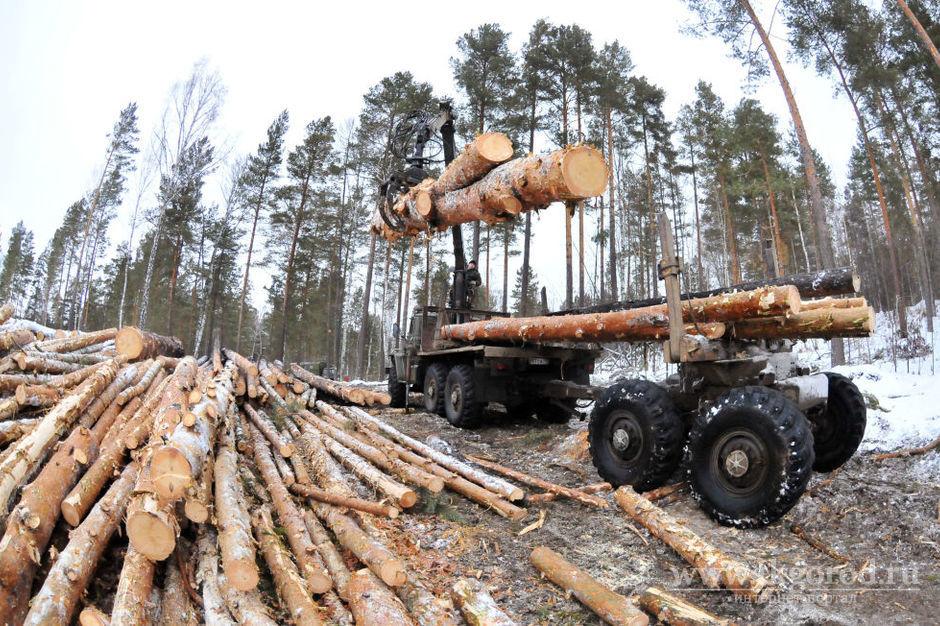 В России гражданина Таджикистана осудили на 5 лет за незаконный сбыт леса на 100 миллионов рублей