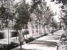 Знакомство с «другим» Душанбе: Деревья нашей молодости