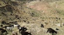 Сохраним пастбища Зеравшанской долины