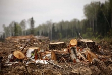 Берегите лес, сдавайте макулатуру! Новое видео проекта