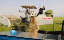 Урожай получился на славу! Фермеры довольны высокой эффективностью рисоуборочных комбайнов CLAAS