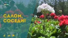 Укротительница львов и редкие цветы таджика: что покажет «Салом, соседи!» на этой неделе?