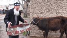 Отдал последнее: пенсионер из Турсунзаде продал скот, чтобы завершить ремонт местной школы