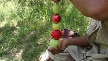 Дерево-гибрид: как таджикский садовник вырастил на одном дереве 14 сортов яблок
