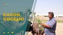 Узбекские страусы и гахвора нашего детства: что покажет «Салом, соседи!» на этой неделе?