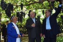 Президента Беларуси угостили самым вкусным виноградом в Таджикистане