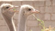 Как весна пришла в таджикский зоопарк раньше времени
