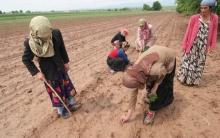 Где работают и сколько получают таджикистанцы?