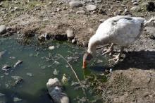 Как Таджикистан очищают от ядохимикатов?
