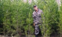 Сколько стоит настоящая, живая елка в Душанбе?