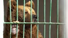 Как зимуют животные в зоопарке Душанбе