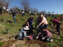 Душанбинцы посадили 2020 деревьев в Парке Победы