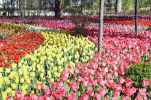 Гулхои Душанбе. Более 7 млн. цветов украсили столицу