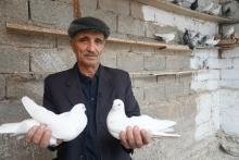 Летите, голуби, летите...Куда делись голубятни Душанбе?