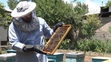 Как таджикский чиновник на досуге превращается в пчеловода
