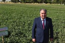 Эмомали Рахмон открыл новые линии производства на предприятии «Оби Зулол»
