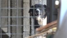 Бездомные животные: почему таджикистанцы защищают их