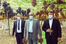 Сын знаменитого виноградаря Таджикистана перечислил более 2,3 млн. сомони на борьбу с коронавирусом