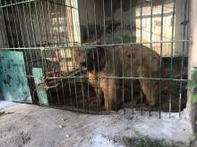 Директор новый, проблемы старые. Что происходит сегодня в Душанбинском зоопарке?