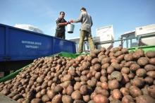 Тендер: MSDSP ищет поставщиков услуг по перевозке картофеля