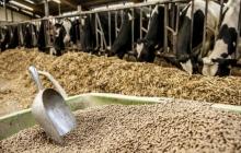 Тендер: MSDSP ищет заинтересованных лиц в поставке комбикормов для коров в ГБАО