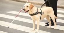 Стартап, который нам нужен: подготовка собак-поводырей