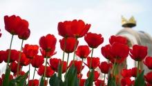 Утопающий в тюльпанах. Душанбе превратился в цветущий сад