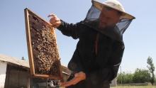 Почему пчеловоды Таджикистана потеряли до половины своих пасек