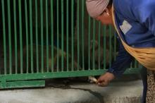 В Душанбинском зоопарке животным опять не хватает воды
