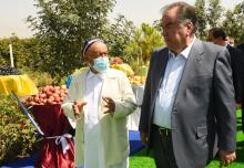 Как известный виноградарь выращивает самые дорогие растения в Таджикистане